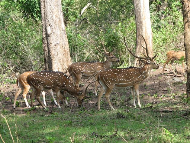 parambikulam-wildlife