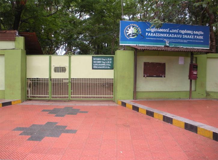 parassinikadavu-snake-park