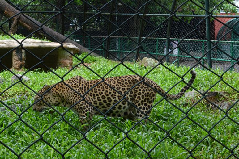 thiruvananthapuram-zoo