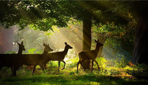 forestry-and-wildlife
