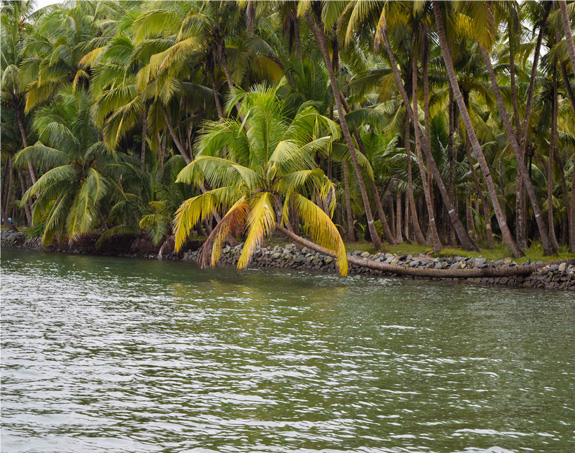 valiyaparamba-backwaters