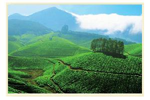 Munnar – Nature Paradise of kerala